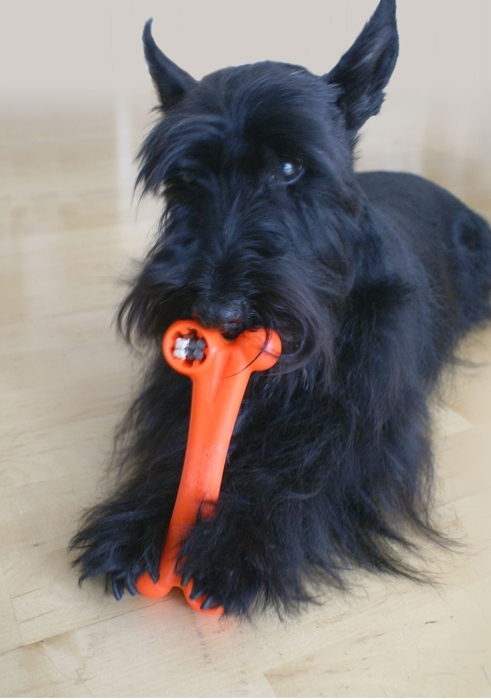 Produktbild Hund_mit_bone_orange.jpg